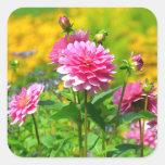 Jardín de flores rosado de la dalia pegatina cuadrada