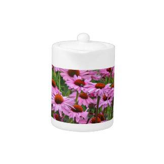 Jardín de flores rosado del echinacea