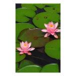 Jardín de flores rosado del lirio de agua del loto
