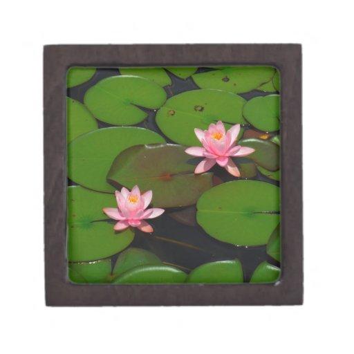 Jardín de flores rosado del lirio de agua del loto cajas de regalo de calidad
