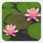 Jardín de flores rosado del lirio de agua del calcomanías cuadradas