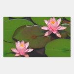 Jardín de flores rosado del lirio de agua del rectangular altavoces