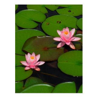 Jardín de flores rosado del lirio de agua del tarjetas postales
