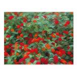 Jardín de flores tarjeta postal
