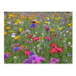 Jardín de flores tarjetas postales