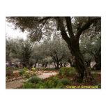 Jardín de Gethsemane Postal
