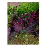 Jardín de hierbas postal