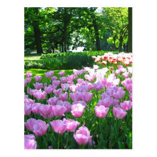 Jardín de Keukenhof - postal de Holanda