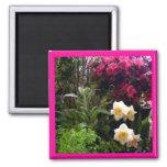 Jardín de la azalea del narciso imanes