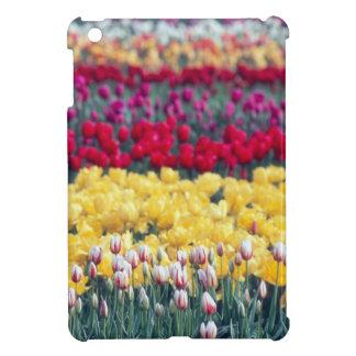 Jardín de la exhibición del tulipán en el valle de