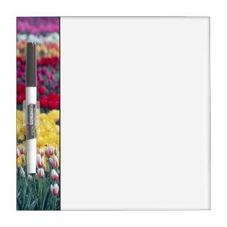 Jardín de la exhibición del tulipán en el valle de pizarras blancas