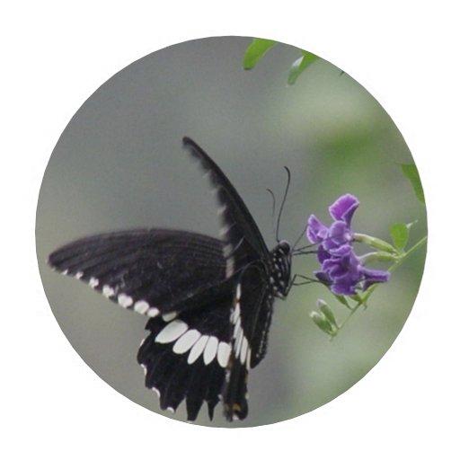 Jardín de la mariposa fichas de póquer