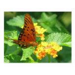 Jardín de la mariposa tarjeta postal