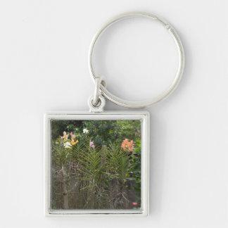Jardín de la orquídea llaveros