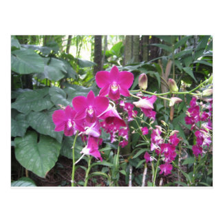 Jardín de la orquídea, Singapur Postal