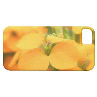 Jardín de la primavera - allionii del Cheiranthus iPhone SE/5/5s Case