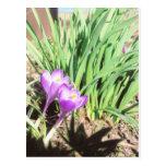 Jardín de la primavera de la abuela tarjetas postales