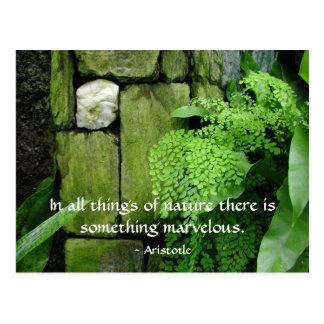 Jardín de piedra: Aristóteles - postal
