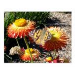 Jardín de reclinación de la mariposa postales