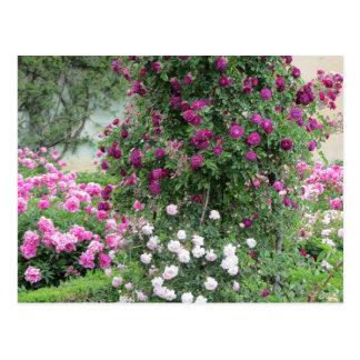 Jardín de rosas postales