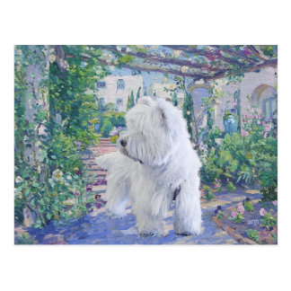 Jardín de Terrier blanco de montaña del oeste Tarjeta Postal