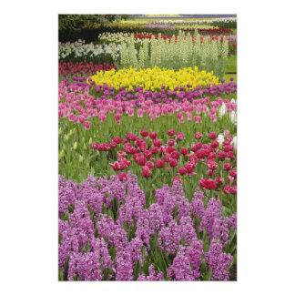 Jardín de tulipanes, de narcisos, y del jacinto fotografías