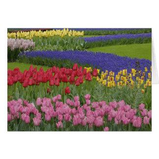 Jardín de tulipanes, jacinto de uva y tarjeta de felicitación