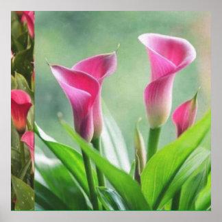 Jardín: Decoraciones rosadas de la flor Posters
