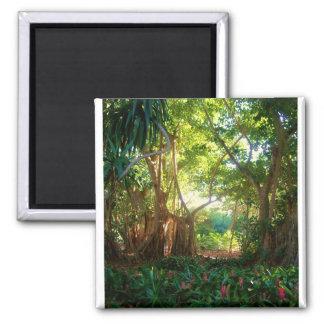 jardín del banyan imán cuadrado