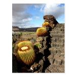 Jardín del cactus de España Lanzarote 04 Postal