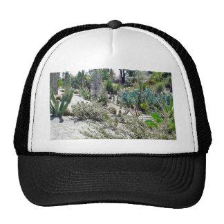 Jardín del cactus en el parque del balboa gorro