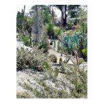 Jardín del cactus en el parque del balboa tarjetas postales