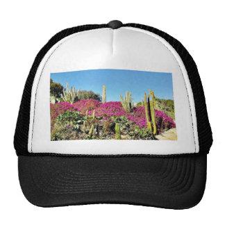 Jardín del cactus gorra
