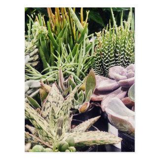 Jardín del cactus postales