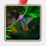 Jardín del colibrí ornamente de reyes