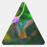 Jardín del colibrí pegatina triangulo