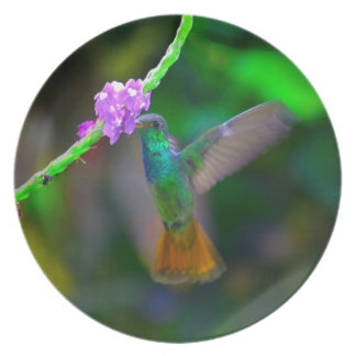 Jardín del colibrí platos