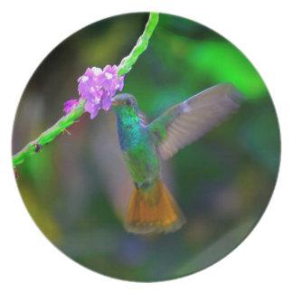 Jardín del colibrí platos de comidas