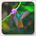 Jardín del colibrí posavasos