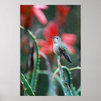 Jardín del colibrí póster