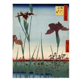 Jardín del iris de Horikiri (堀切の花菖蒲) Tarjetas Postales