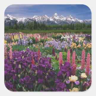 Jardín del iris y del Lupine y gama de Teton, Colcomania Cuadrada