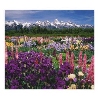 Jardín del iris y del Lupine y gama de Teton Foto