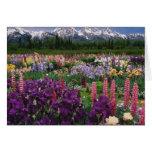 Jardín del iris y del Lupine y gama de Teton, Felicitación