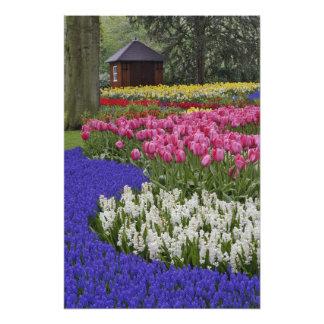 Jardín del jacinto de uva, del jacinto y de tulipa fotografía