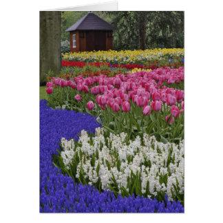 Jardín del jacinto de uva, del jacinto y de tulipa tarjeta de felicitación