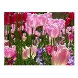 Jardín del tulipán postal