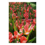 Jardín del tulipán poster