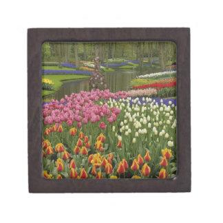 Jardín del tulipán y del jacinto, jardines de Keuk Caja De Regalo De Calidad