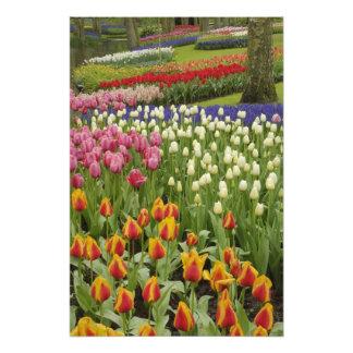 Jardín del tulipán y del jacinto, jardines de Keuk Fotografía